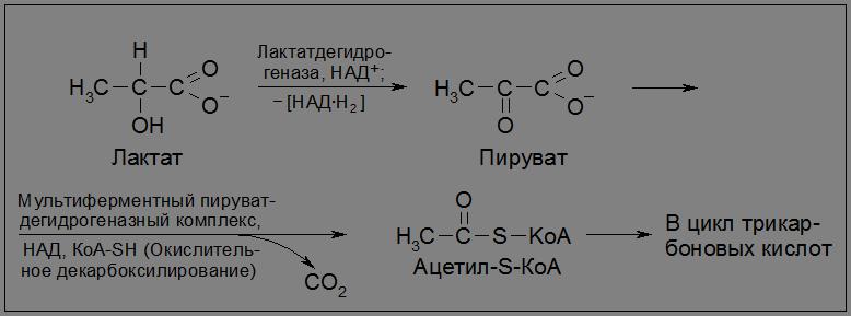 МЕТОДИЧЕСКИЕ УКАЗАНИЯ по изучению биологической химии и задания  Во второй стадии аэробного окисления пировиноградная кислота подвергается окислительному декарбоксилированию с образованием ацилированного по группе sh
